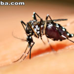 Ceará é o Estado com maior número de casos de chikungunya, segundo Ministério da Saúde