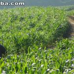 Mais de 160 mil agricultores recebem Garantia Safra 2015/2016 no Ceará