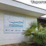 Funcionários de ONG em Caucaia morrem após inalarem gás tóxico